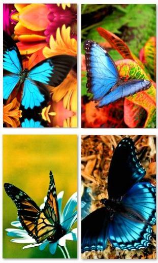 sfondi-butterfly-omnia